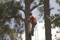 Professional tree trimming service in Tampa, FL