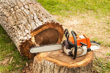 Chainsaw resting on a fallen tree
