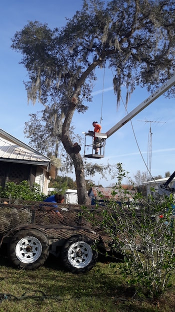 Tree removal service in Tampa, FL
